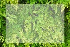 Piccola pianta verde nell'azienda agricola nordica di agricoltura con la struttura bianca per testo Fotografia Stock Libera da Diritti