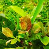 Piccola pianta verde fotografie stock
