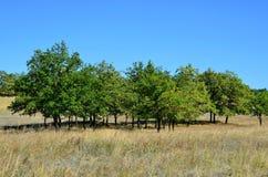 Piccola piantagione di alberi Immagini Stock