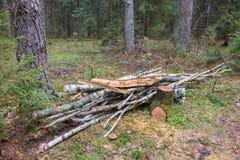Piccola pila di legna da ardere in foresta Fotografia Stock