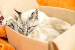 Piccola posa del gatto Fotografie Stock Libere da Diritti