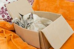 Piccola posa del gatto Fotografia Stock