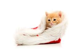 Piccola protezione rossa di natale e del gattino Fotografie Stock Libere da Diritti