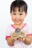 Piccola ragazza cinese asiatica che tiene piccolo uccello in mani fotografia stock libera da diritti