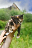 Piccola ragazza del gattino Immagini Stock