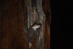 Piccola rana sveglia in un albero immagini stock libere da diritti