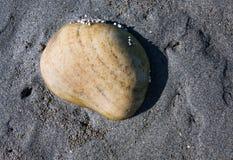 Piccola roccia sulla sabbia bagnata Fotografia Stock