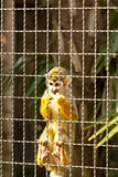 Piccola scimmia Immagine Stock