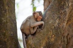 Piccola scimmia che si rilassa sull'albero in Tailandia Fotografia Stock