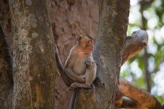 Piccola scimmia che si rilassa sull'albero in Tailandia immagine stock