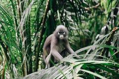 Piccola scimmia in spiaggia Tailandia di Railay fotografia stock