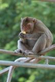 Piccola scimmia sveglia Fotografia Stock