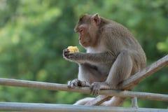 Piccola scimmia sveglia Immagini Stock
