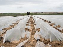 Impianto di irrigazione serra stock images 56 photos for Irrigazione serra
