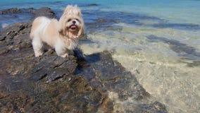 Piccola spiaggia del mare del cane Immagini Stock