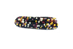 Piccola spiga del granoturco multicolore isolata Immagini Stock