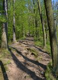 Piccola strada attraverso la foresta Fotografie Stock Libere da Diritti