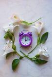 Piccola sveglia porpora circondata con i fiori di alstroemeria Fotografie Stock
