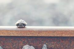 Piccola tartaruga fotografie stock libere da diritti