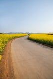 Piccola toppa del fiore del canola del fiore di Luoping dal lato di una strada rurale Bazi Fotografia Stock Libera da Diritti