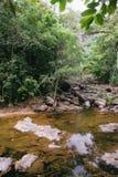 Piccola torrente montano in una giungla ombreggiata Fotografia Stock Libera da Diritti