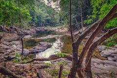 Piccola torrente montano in una giungla ombreggiata Fotografia Stock