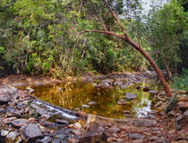Piccola torrente montano in una giungla ombreggiata Immagine Stock