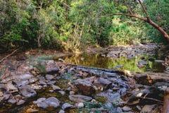 Piccola torrente montano in una giungla ombreggiata Fotografie Stock Libere da Diritti