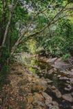 Piccola torrente montano in una giungla ombreggiata Immagine Stock Libera da Diritti
