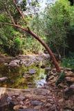Piccola torrente montano in una giungla ombreggiata Fotografie Stock