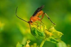 Piccola vespa rossa su flawer_DSC1987 fotografia stock libera da diritti