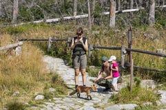 Piccola volpe alla foresta in alte montagne di Tatras, Slovacchia Fotografia Stock Libera da Diritti