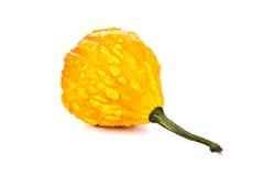 Piccola zucca gialla Fotografia Stock