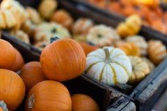 Piccola zucca per le decorazioni di Halloween fotografia stock libera da diritti