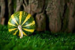 Piccola zucca a strisce decorativa Fotografie Stock