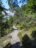 Piccole alpi svizzere d'escursione della depressione del percorso vicino a Oeschinensee in Kanders Immagini Stock Libere da Diritti