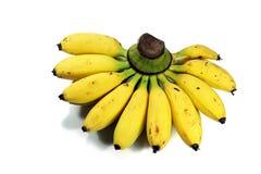 Piccole banane 1 Fotografia Stock