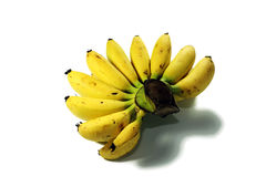 Piccole banane 2 Immagine Stock