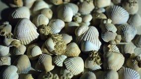 Piccole, belle conchiglie con la sabbia e parte posteriore video d archivio