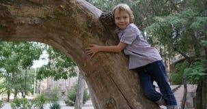 Piccole bugie allegre del tipo ed abbracciare il grande primo piano dell'albero all'aperto stock footage