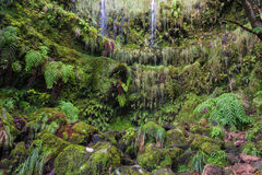 Piccole cascate a Caldeirao Verde Fotografia Stock