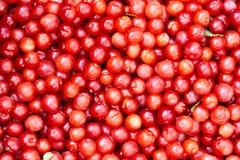 Piccole ciliege rosse Immagini Stock Libere da Diritti