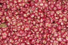 Piccole cipolle rosse Fotografia Stock