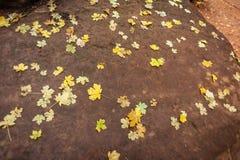 Piccole foglie dorate di caduta sparse su una roccia marrone scura immagine stock libera da diritti