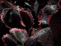 Piccole gocce di acqua con le foglie dopo le goccioline della pioggia fotografie stock libere da diritti