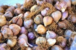 Piccole lampadine dell'aglio Immagini Stock Libere da Diritti