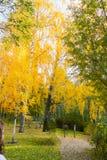 Piccole lanterne vicino al vicolo nel parco sotto l'alta betulla con le foglie dorate Immagine Stock