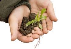 Piccole mani che tengono una pianta Immagini Stock Libere da Diritti