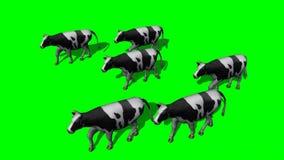 Piccole mucche del gregge - schermo verde illustrazione vettoriale
