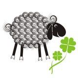 Piccole pecore sveglie Fotografie Stock